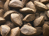 Brazil nuts - photo/picture definition - Brazil nuts word and phrase image