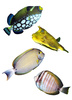 tropical reef fish - photo/picture definition - tropical reef fish word and phrase image