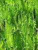fern - photo/picture definition - fern word and phrase image