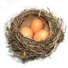bird nest - photo/picture definition - bird nest word and phrase image