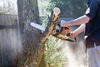 woodcutter - photo/picture definition - woodcutter word and phrase image