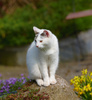 white cat - photo/picture definition - white cat word and phrase image