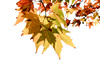 autumn leaves - photo/picture definition - autumn leaves word and phrase image
