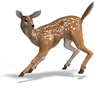 young doe - photo/picture definition - young doe word and phrase image