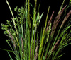 grass blade - photo/picture definition - grass blade word and phrase image