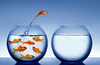 goldfish - photo/picture definition - goldfish word and phrase image
