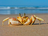 crab - photo/picture definition - crab word and phrase image