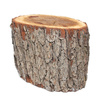 stump - photo/picture definition - stump word and phrase image