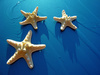 starfish - photo/picture definition - starfish word and phrase image
