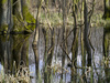 marshland - photo/picture definition - marshland word and phrase image