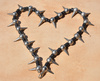 spiny heart - photo/picture definition - spiny heart word and phrase image