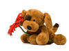 toy dog - photo/picture definition - toy dog word and phrase image