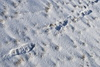 snow prints - photo/picture definition - snow prints word and phrase image