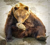 bear - photo/picture definition - bear word and phrase image