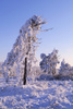 hoarfrost - photo/picture definition - hoarfrost word and phrase image
