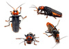 longhorn beatle - photo/picture definition - longhorn beatle word and phrase image