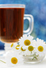 camomille tea - photo/picture definition - camomille tea word and phrase image