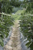 plantation - photo/picture definition - plantation word and phrase image