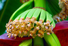 banana flowers - photo/picture definition - banana flowers word and phrase image