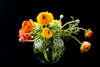 ranunculus flowers - photo/picture definition - ranunculus flowers word and phrase image
