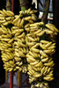 banana bunches - photo/picture definition - banana bunches word and phrase image