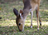 young antelope - photo/picture definition - young antelope word and phrase image