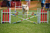 dog agility trial - photo/picture definition - dog agility trial word and phrase image