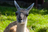 guanacos - photo/picture definition - guanacos word and phrase image