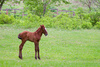 foal - photo/picture definition - foal word and phrase image
