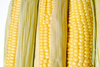 corn cobs - photo/picture definition - corn cobs word and phrase image