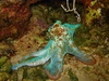 Atlantic octopus - photo/picture definition - Atlantic octopus word and phrase image