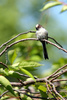 titmouse bird - photo/picture definition - titmouse bird word and phrase image