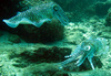 cuttle fish - photo/picture definition - cuttle fish word and phrase image
