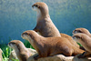 Otters - photo/picture definition - Otters word and phrase image