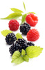 berry fruit - photo/picture definition - berry fruit word and phrase image