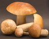 eatable mushrooms - photo/picture definition - eatable mushrooms word and phrase image