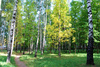 forest landscape - photo/picture definition - forest landscape word and phrase image