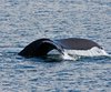 humpback whale - photo/picture definition - humpback whale word and phrase image