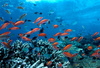 coral fish - photo/picture definition - coral fish word and phrase image