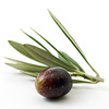 olive - photo/picture definition - olive word and phrase image