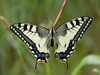 Papilio machaon - photo/picture definition - Papilio machaon word and phrase image