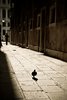 Venetian dove - photo/picture definition - Venetian dove word and phrase image