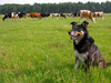 herder - photo/picture definition - herder word and phrase image