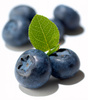 blueberries - photo/picture definition - blueberries word and phrase image