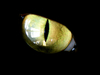 feline eye - photo/picture definition - feline eye word and phrase image