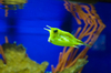 Cowfish - photo/picture definition - Cowfish word and phrase image