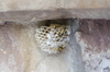 wasp nest - photo/picture definition - wasp nest word and phrase image
