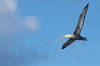 albatross - photo/picture definition - albatross word and phrase image