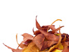 dried leaves - photo/picture definition - dried leaves word and phrase image