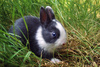 bunny - photo/picture definition - bunny word and phrase image